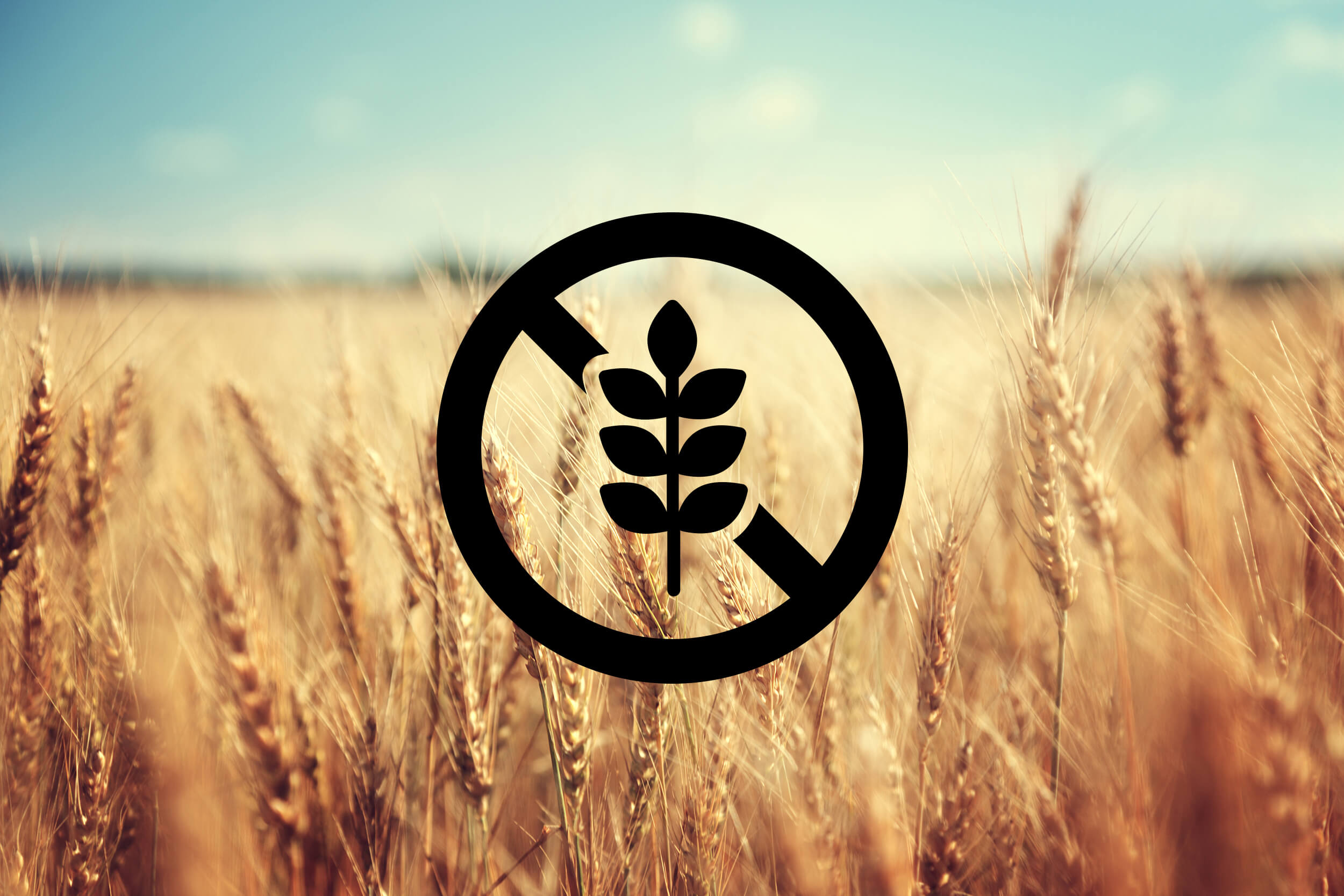 Gluten Free logo on field of wheat